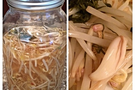 pickled mung bean sprouts in mason jar