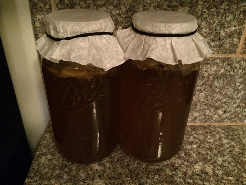 brewing kombucha tea in warm dark area